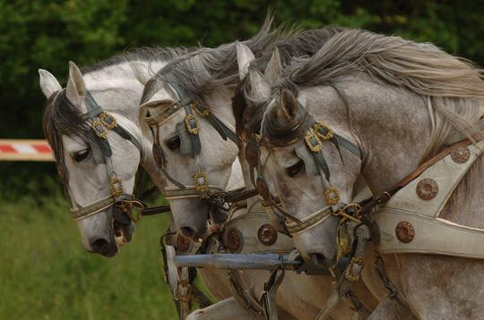 Ben-Hur au Stade de France (Robert HOSSEIN / Mario LURASCHI)